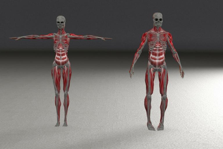 podjela mišića