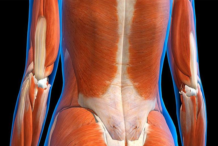 kako mišići rastu